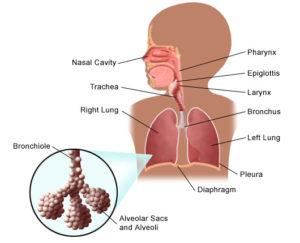 воспаления легких